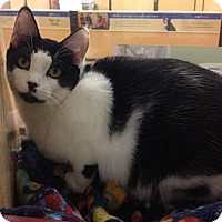 Adopt A Pet :: Aria - Miami, FL