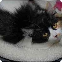 Adopt A Pet :: Sabrina - Modesto, CA