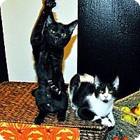 Adopt A Pet :: Ebony *REDUCED FEE* - San Diego, CA