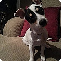 Adopt A Pet :: Patches - Wytheville, VA
