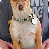 Adopt A Pet :: Micha - Santa Monica, CA