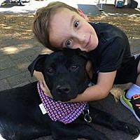 Adopt A Pet :: Christian - Alpharetta, GA