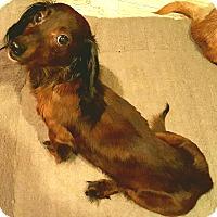 Adopt A Pet :: Mocha - Andalusia, PA