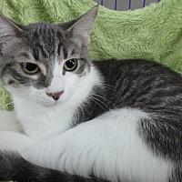 Adopt A Pet :: Nanu - Seguin, TX