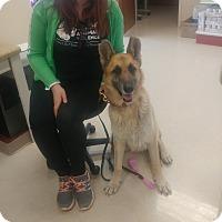 Adopt A Pet :: George (Courtesy Post) - Nashua, NH