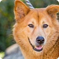 Adopt A Pet :: Kwanjai - San Diego, CA