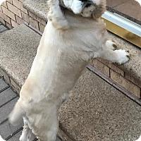 Adopt A Pet :: Gordon - Flushing, NY