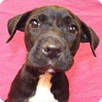 Adopt A Pet :: Baru - Oxford, MS