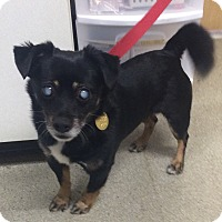 Adopt A Pet :: Kipper-BLIND - Oak Ridge, NJ