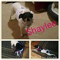 Adopt A Pet :: Shaylee - Garden City, MI