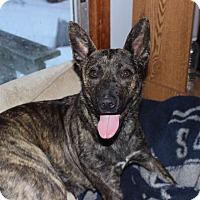 Adopt A Pet :: Dixie - Lima, PA