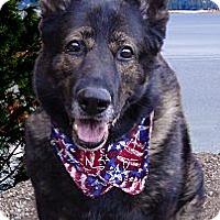 Adopt A Pet :: Sager AKC purebred - Sacramento, CA