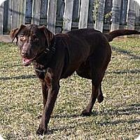 Adopt A Pet :: Sunnie - Hamilton, ON