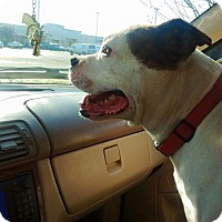 Adopt A Pet :: Gucci - grants pass, OR