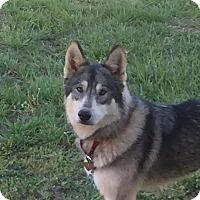 Adopt A Pet :: Pearl - Augusta County, VA