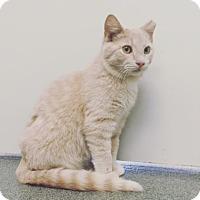 Adopt A Pet :: Palmer - Mt. Pleasant, MI