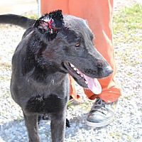 Adopt A Pet :: Lucky Lucy - Harmony, Glocester, RI