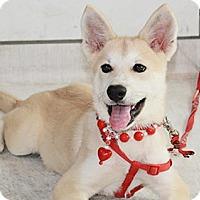 Adopt A Pet :: Lisa - Surrey, BC