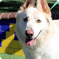 Adopt A Pet :: Dougan - San Diego, CA