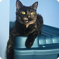 Adopt A Pet :: Tammy - Richmond Hill, ON