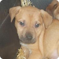 Adopt A Pet :: Serigo - Rocky Mount, NC