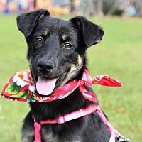 Adopt A Pet :: Daisy - San Francisco, CA