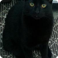 Adopt A Pet :: Olivia & Elliott - Frankfort, IL