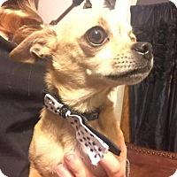 Adopt A Pet :: TITO - Lawton, OK