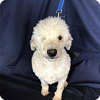 Adopt A Pet :: Kenya - Chico, CA