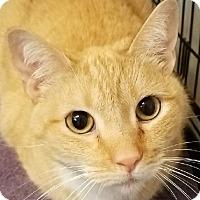 Adopt A Pet :: PussInBoots - Lexington, KY