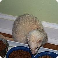 Adopt A Pet :: Miss Lucy - Acworth, GA