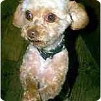 Adopt A Pet :: Emerson - dewey, AZ