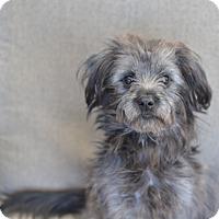 Adopt A Pet :: Rizzo - Los Angeles, CA