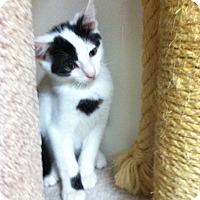 Adopt A Pet :: Angus - Trevose, PA