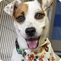 Adopt A Pet :: Coraline - Knoxville, TN