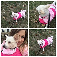 Adopt A Pet :: Keesha - Elmhurst, IL