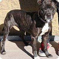 Adopt A Pet :: Theresa - Gilbert, AZ