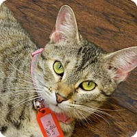 Adopt A Pet :: Catti LaBelle - The Colony, TX