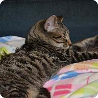 Adopt A Pet :: Oliver - Albemarle, NC