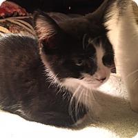 Adopt A Pet :: Fingle - Delmont, PA