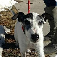 Adopt A Pet :: Tyler - Denver, CO