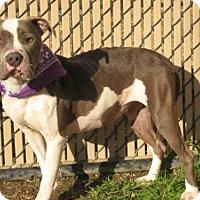 Adopt A Pet :: *SUNSHINE - Norco, CA