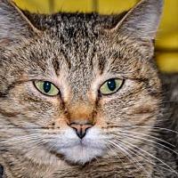 Adopt A Pet :: Moochie - Alexandria, VA