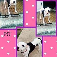 Adopt A Pet :: Diamond - Bogalusa, LA