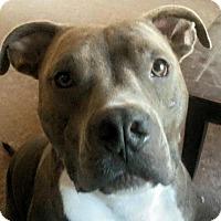 Adopt A Pet :: HUMPHREY - Modesto, CA