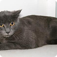 Adopt A Pet :: Stormy - Bradenton, FL