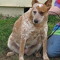 Adopt A Pet :: Daisy - Parker, KS