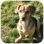 Photo 2 - Dachshund Mix Dog for adoption in Xenia, Ohio - Danny