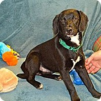 Adopt A Pet :: Cooper - Hagerstown, MD