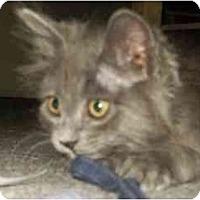 Adopt A Pet :: Meringue - Davis, CA
